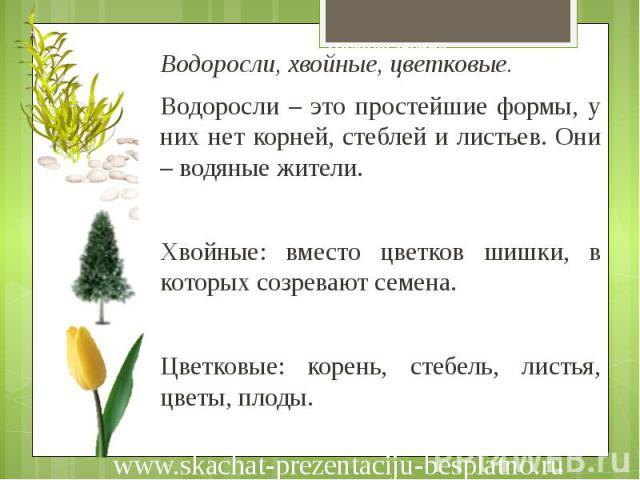 Низшая группа Водоросли, хвойные, цветковые. Водоросли – это простейшие формы, у них нет корней, стеблей и листьев. Они – водяные жители. Хвойные: вместо цветков шишки, в которых созревают семена. Цветковые: корень, стебель, листья, цветы, плоды.