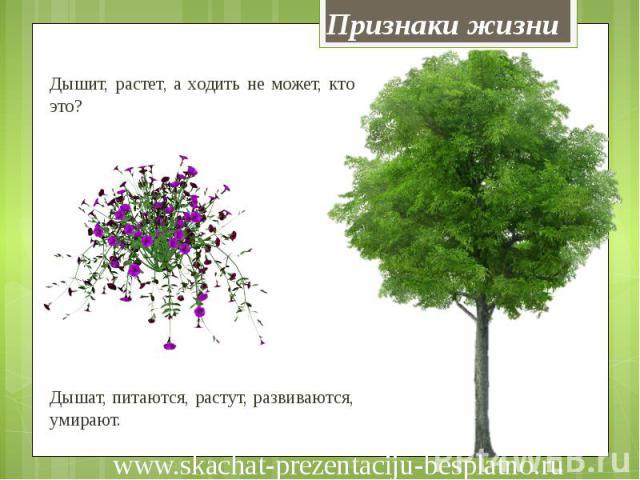 Признаки жизни Дышит, растет, а ходить не может, кто это? Дышат, питаются, растут, развиваются, умирают.