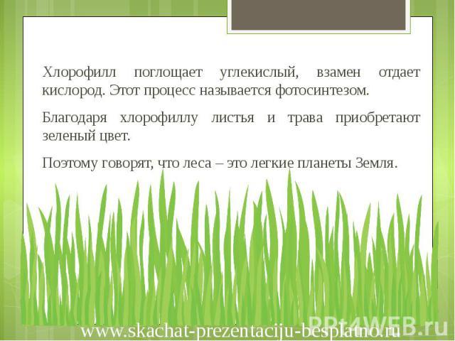 Хлорофилл поглощает углекислый, взамен отдает кислород. Этот процесс называется фотосинтезом. Хлорофилл поглощает углекислый, взамен отдает кислород. Этот процесс называется фотосинтезом. Благодаря хлорофиллу листья и трава приобретают зеленый цвет.…