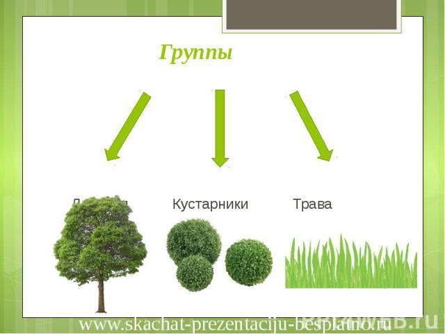 Группы Деревья Кустарники Трава