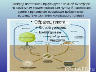 Углерод постоянно циркулирует в земной биосфере по замкнутым взаимосвязанным пут