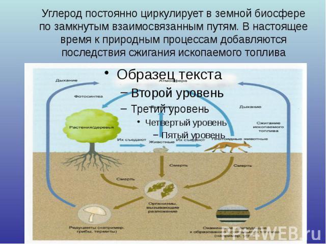 Углерод постоянно циркулирует в земной биосфере по замкнутым взаимосвязанным путям. В настоящее время к природным процессам добавляются последствия сжигания ископаемого топлива
