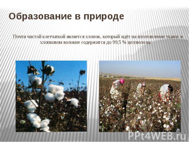 Образование в природе Почти чистой клетчаткой является хлопок, который идёт на изготовление ткани: в хлопковом волокне содержится до 99,5% целлюлозы