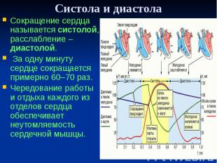 Систола и диастола Сокращение сердца называется систолой, расслабление – диастол