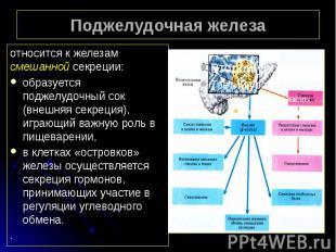 Поджелудочная железа относится к железам смешанной секреции: образуется поджелуд