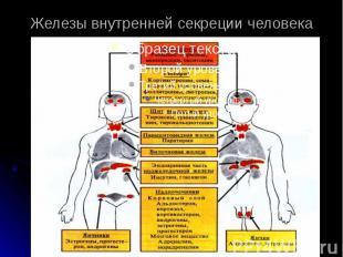 Железы внутренней секреции человека