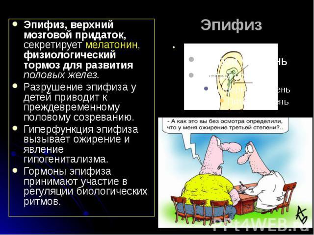 Эпифиз Эпифиз, верхний мозговой придаток, секретирует мелатонин, физиологический тормоз для развития половых желез. Разрушение эпифиза у детей приводит к преждевременному половому созреванию. Гиперфункция эпифиза вызывает ожирение и явление гипогени…