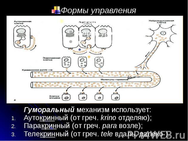 Формы управления Гуморальный механизм использует: Аутокринный (от греч. krino отделяю); Паракринный (от греч. para возле); Телекринный (от греч. tele вдаль, далеко ).