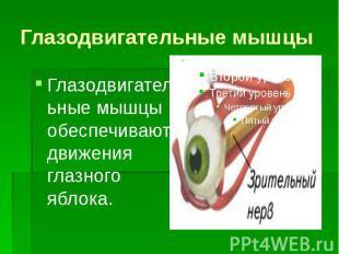 Глазодвигательные мышцы Глазодвигательные мышцы обеспечивают движения глазного я