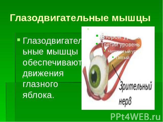 Глазодвигательные мышцы Глазодвигательные мышцы обеспечивают движения глазного яблока.