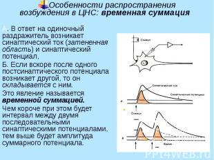 Особенности распространения возбуждения в ЦНС: временная суммация А. В ответ на