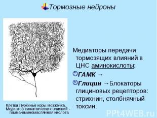 Тормозные нейроны Медиаторы передачи тормозящих влияний в ЦНС аминокислоты: ГАМК