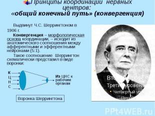 Принципы координации нервных центров: «общий конечный путь» (конвергенция) Выдви