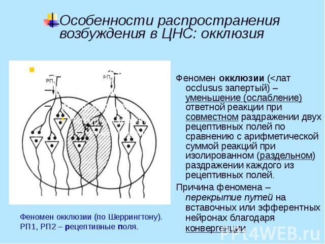 Особенности распространения возбуждения в ЦНС: окклюзия Феномен окклюзии (<лат occlusus запертый) – уменьшение (ослабление) ответной реакции при совместном раздражении двух рецептивных полей по сравнению с арифметической суммой реакций при изолир…