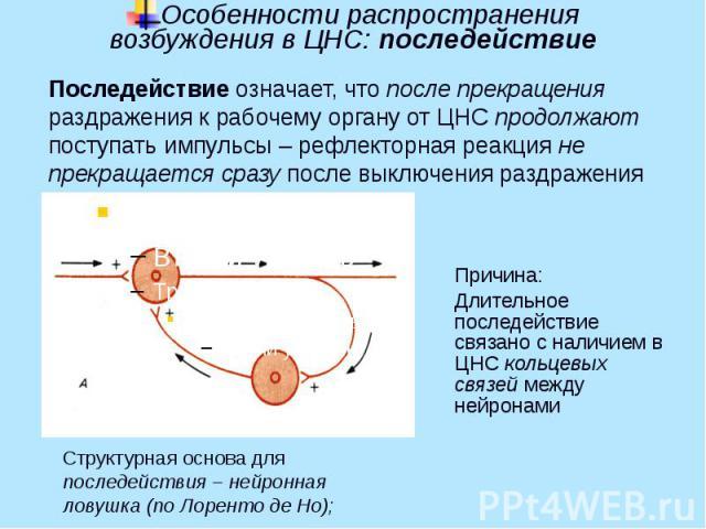 Особенности распространения возбуждения в ЦНС: последействие Причина: Длительное последействие связано с наличием в ЦНС кольцевых связей между нейронами