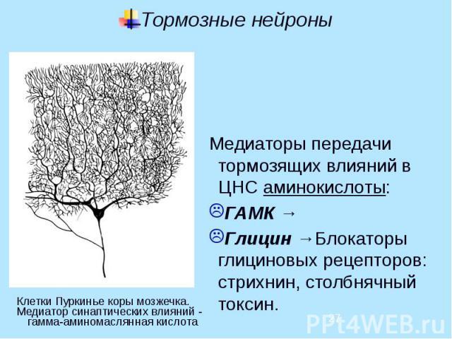 Тормозные нейроны Медиаторы передачи тормозящих влияний в ЦНС аминокислоты: ГАМК → Глицин →Блокаторы глициновых рецепторов: стрихнин, столбнячный токсин.