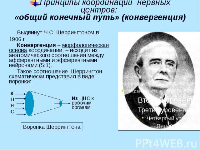 Принципы координации нервных центров: «общий конечный путь» (конвергенция) Выдвинут Ч.С. Шеррингтоном в 1906 г. Конвергенция – морфологическая основа координации, – исходит из анатомического соотношения между афферентными и эфферентными нейронами (5…
