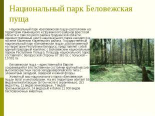 Национальный парк Беловежская пуща Национальный парк «Беловежская пуща» располож