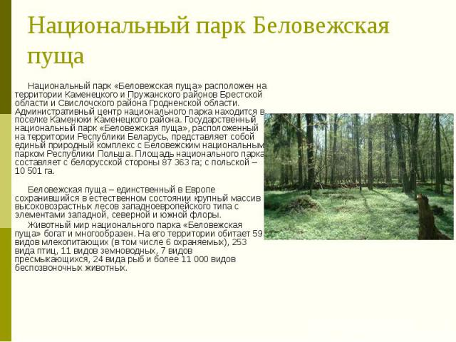 Национальный парк Беловежская пуща Национальный парк «Беловежская пуща» расположен на территории Каменецкого и Пружанского районов Брестской области и Свислочского района Гродненской области. Административный центр национального парка находится в по…