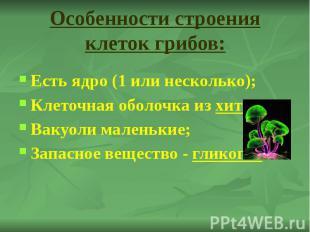 Особенности строения клеток грибов: Есть ядро (1 или несколько); Клеточная оболо