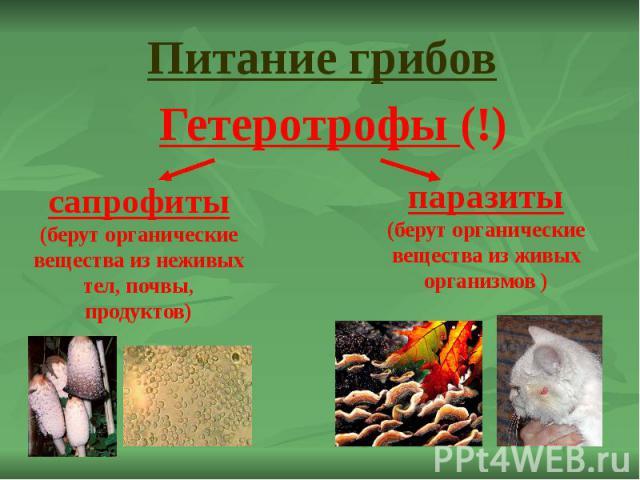 Питание грибов