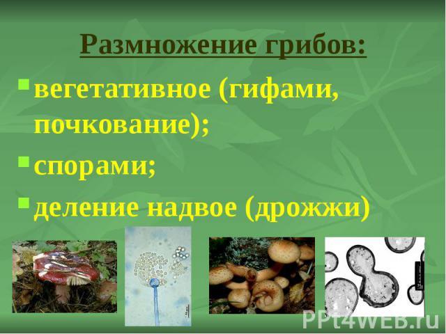 Размножение грибов: вегетативное (гифами, почкование); спорами; деление надвое (дрожжи)