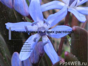 Систематика высших растений Общая характеристика Высшие споровые растения Высшие
