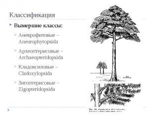Классификация Вымершие классы: Аневрофитовые – Aneurophytopsida Археоптерисовые