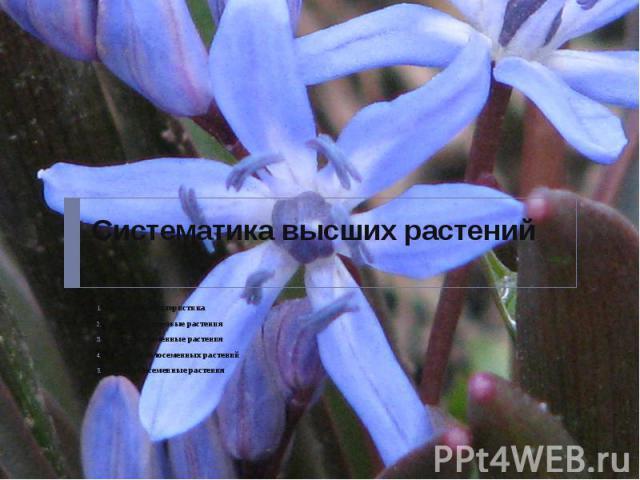 Систематика высших растений Общая характеристика Высшие споровые растения Высшие семенные растения Отделы голосеменных растений Покрытосеменные растения