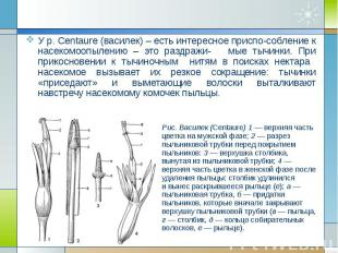 У р. Centaure (василек) – есть интересное приспо-собление к насекомоопылению – э