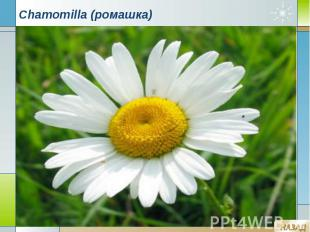 Chamomilla (ромашка)