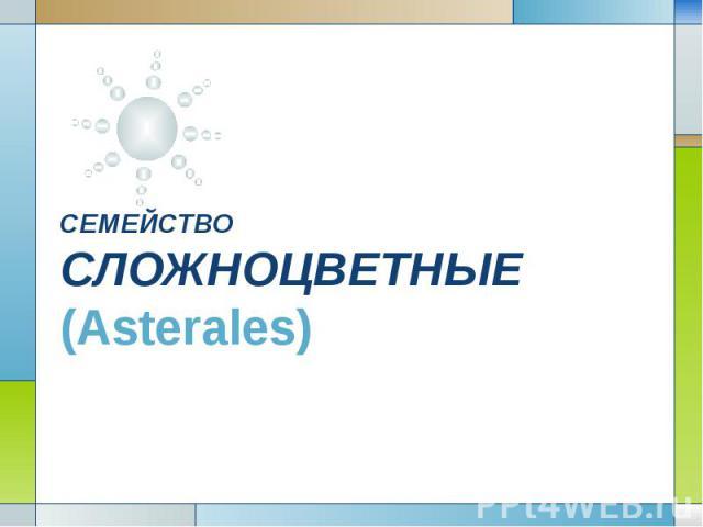 СЕМЕЙСТВО СЛОЖНОЦВЕТНЫЕ (Asterales)