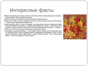 Интересные факты Рябина на протяжении многих веков считалась магическим растение