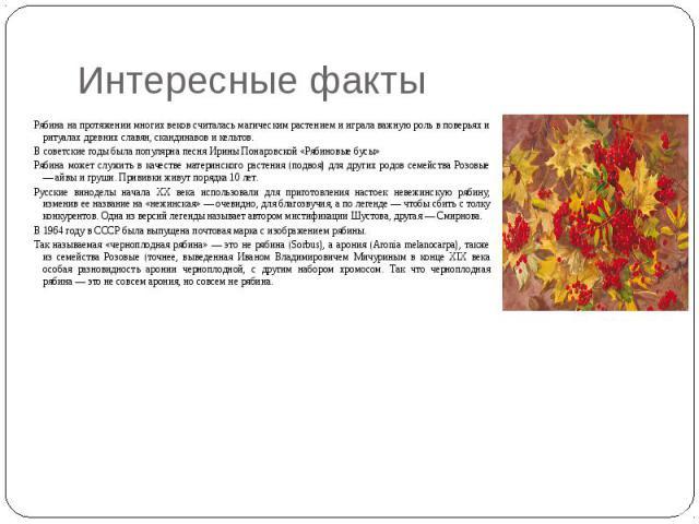 Интересные факты Рябина на протяжении многих веков считалась магическим растением и играла важную роль в поверьях и ритуалах древних славян, скандинавов и кельтов. В советские годы была популярна песня Ирины Понаровской «Рябиновые бусы» Рябина может…