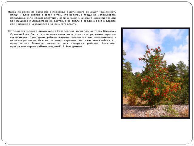 Название растения aucuparia в переводе с латинского означает «заманивать птиц» и дано рябине в связи с тем, что красивые ягоды ее использовали птицеловы. С лечебным действием рябины были знакомы в Древней Греции. Как пищевое и лекарственное растение…