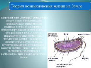 Возникновение мембраны, обладающей способностью к избирательной проницаемости, с
