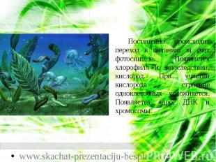 Постепенно происходит переход к питанию за счет фотосинтеза. Появляется хлорофил