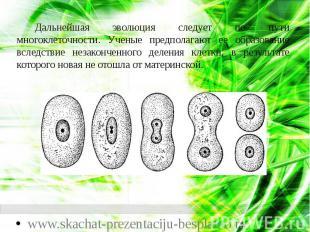 Дальнейшая эволюция следует по пути многоклеточности. Ученые предполагают ее обр