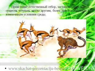 Происходит естественный отбор, заставляя одних живых существ уступать место друг