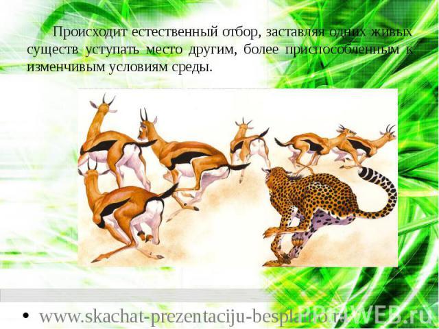 Происходит естественный отбор, заставляя одних живых существ уступать место другим, более приспособленным к изменчивым условиям среды. Происходит естественный отбор, заставляя одних живых существ уступать место другим, более приспособленным к изменч…