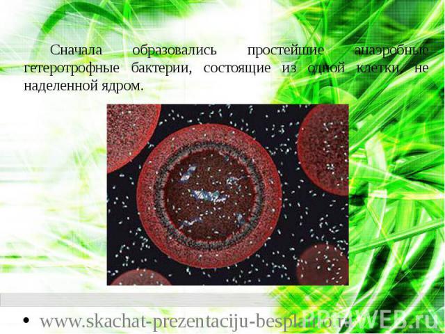 Сначала образовались простейшие анаэробные гетеротрофные бактерии, состоящие из одной клетки, не наделенной ядром. Сначала образовались простейшие анаэробные гетеротрофные бактерии, состоящие из одной клетки, не наделенной ядром.
