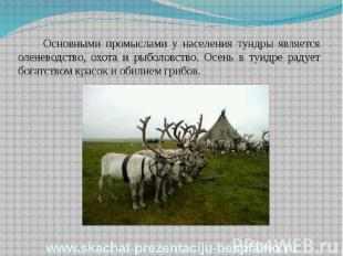 Основными промыслами у населения тундры является оленеводство, охота и рыболовст
