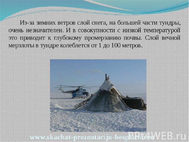 Из-за зимних ветров слой снега, на большей части тундры, очень незначителен. И в совокупности с низкой температурой это приводит к глубокому промерзанию почвы. Слой вечной мерзлоты в тундре колеблется от 1 до 100 метров. Из-за зимних ветров слой сне…