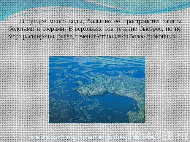 В тундре много воды, большие ее пространства заняты болотами и озерами. В верховьях рек течение быстрое, но по мере расширения русла, течение становится более спокойным. В тундре много воды, большие ее пространства заняты болотами и озерами. В верхо…