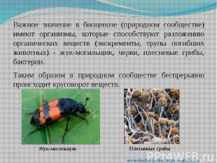 Важное значение в биоценозе (природном сообществе) имеют организмы, которые спос