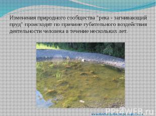"""Изменения природного сообщества """"река - загнивающий пруд"""" происходят п"""
