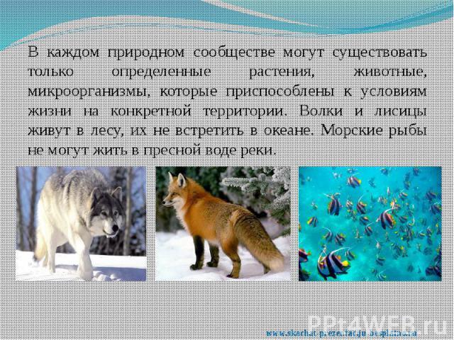 В каждом природном сообществе могут существовать только определенные растения, животные, микроорганизмы, которые приспособлены к условиям жизни на конкретной территории. Волки и лисицы живут в лесу, их не встретить в океане. Морские рыбы не могут жи…