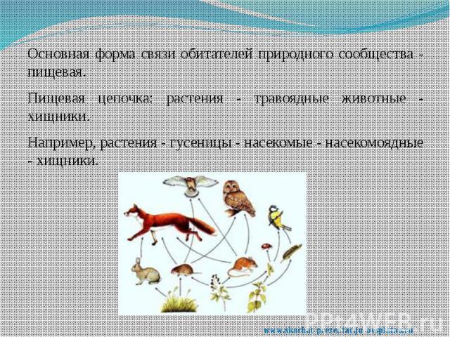 Основная форма связи обитателей природного сообщества - пищевая. Основная форма связи обитателей природного сообщества - пищевая. Пищевая цепочка: растения - травоядные животные - хищники. Например, растения - гусеницы - насекомые - насекомоядные - …