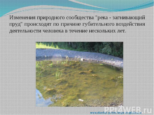 """Изменения природного сообщества """"река - загнивающий пруд"""" происходят по причине губительного воздействия деятельности человека в течение нескольких лет. Изменения природного сообщества """"река - загнивающий пруд"""" происходят по прич…"""