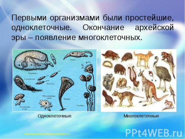 Первыми организмами были простейшие, одноклеточные. Окончание архейской эры – появление многоклеточных. Первыми организмами были простейшие, одноклеточные. Окончание архейской эры – появление многоклеточных.